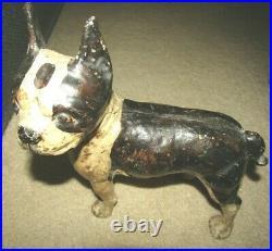 Rare Antique Cast Iron Left Look Boston Terrier Dog Door Stop-10 1/4x11